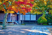 Yard Of Tradtional Wooden Shinto Shrine With Seasonal Red Maple Trees At Koyasan Mountain At Fall.