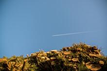 Smuga Na Niebie Po Przelatującym Samolocie Z Perspektywy Patrzącego Spod ściętej Sterty Drzew
