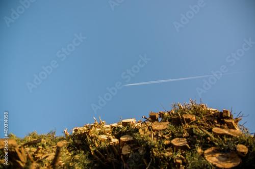 Fototapeta Smuga na niebie po przelatującym samolocie z perspektywy patrzącego spod ściętej sterty drzew obraz