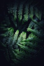 Full Frame Nature Background Of Fern Fronds In A Tropical Jungle At Night In Close Up