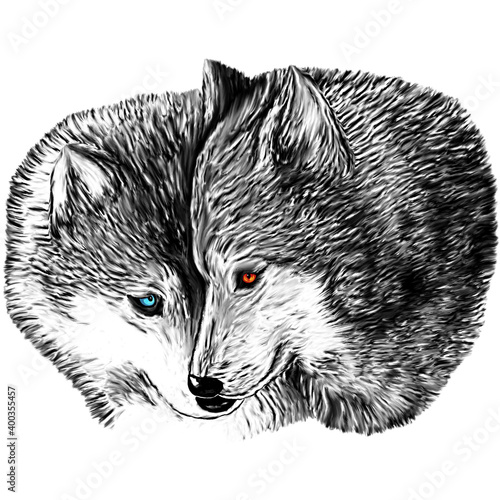 Fotografie, Obraz drawing of a she-wolf and a wolf