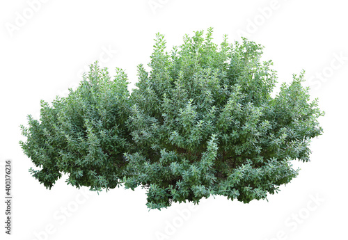 Tropical plant flower bush tree isolated on white background with clipping path Fototapete