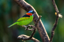 A Multicoroed Songbird Perched On A Tree Branch