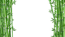 Bamboo Background. Realistic Framing Banner With Place For Text. Green Segmented Trunk And Narrow Leaves. Floral Borders And Copy Space. Natural Decoration Template, Vector Tropical Forest