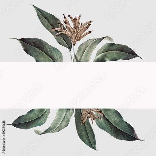 Fototapeta Tropical plant mockup illustration obraz
