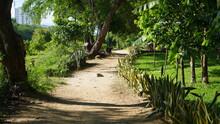 Camino En La Naturleza