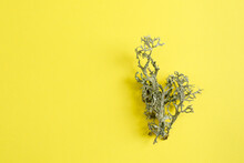 Creative Photo Of Lichen (Hypogymnia Physodes) On Trendy Illuminating Yellow Background.