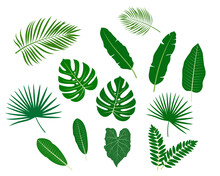 Tropical Leaves Svg, Monstera Leaf Svg, Commercial Use Svg, Jungle Leaves Clipart, Palm Branch Svg, Digital File Download