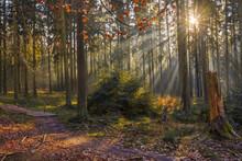 Tiefstehende Sonnenstrahlen Im Herbstwald