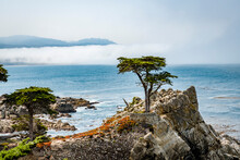 Lone Cypress In 17 Mile