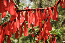 Chinese Ritual: Collection Of Red Ribbons Tied In Tree For Good Luck And Wishes Come True