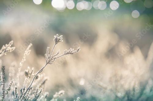 Fototapeta Frozen meadow obraz