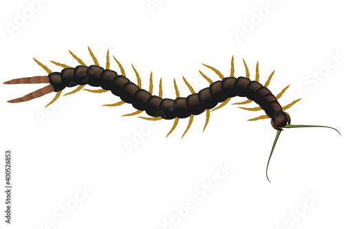 Foto Centipede poisonous on a white background