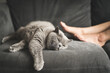 canvas print picture - Close up of a British Short Hair cat sleeping next to a woman's feet on a grey sofa in a house in Edinburgh, Scotland, United Kingdom