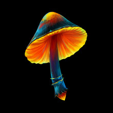 Digital Painted Mushroom. Modern Digital Illustration. Isolated From The Background Element.