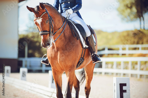 A strong, beautiful bay horse with a rider in the saddle participates in dressage competitions on a sunny summer day Fototapet
