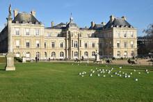 Mouettes Sur Les Pelouses Du Jardin Du Luxembourg à Paris, France
