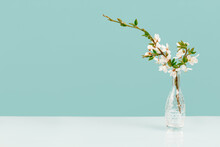 Spring Or Summer Festive Blooming With White Flowers Fruit Tree Branches In Small Crystal Vase Against Tender Green Blue Background. Fresh Floral Background With Copy Space