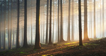 Panoramic view of the mysterious evergreen forest in a fog. Ancient pine tree silhouettes close-up. Dark atmospheric summer landscape. Sun rays. Nature, ecology, fantasy, fairytale, silence, darkness