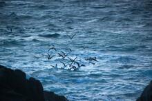 Sea Gulls Flying Over The Ocean