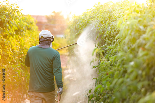 Fototapeta Asian farmer with gas mask spraying orchard in spring Farmers spray their plants with poison or pesticides. obraz