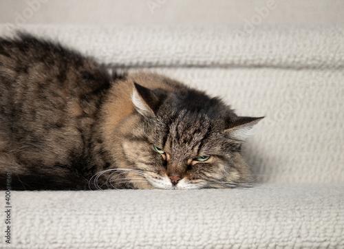 Fotografia Cat scowling or afraid