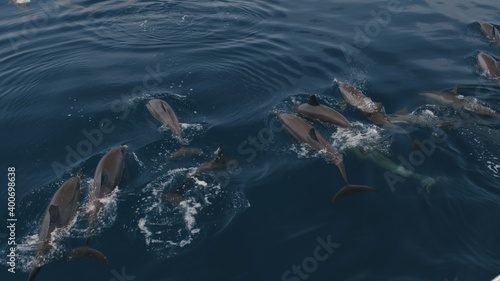 bottlenose dolphins swim and play Fototapet