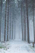 Zima V Lese, Bílé Karpaty