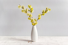 Fresh Fluffy Blossoming Pussy Willow Branches In A White Vase On A Light Background. Beautiful Home Decor In Spring.