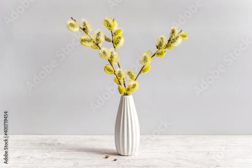 Fotografia Fresh fluffy blossoming pussy willow branches in a white vase on a light background