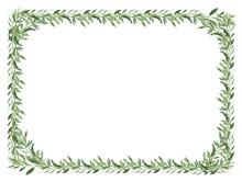 Cadre D'olivier, Fond Blanc