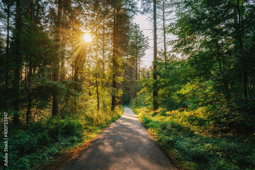 A lonely road in the middle of the woods on a sunny summer morning Fotobehang