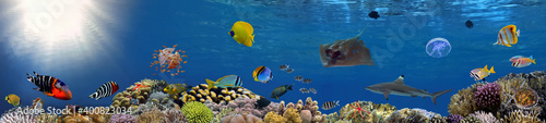 Valokuva Coral reef underwater panorama with school of colorful tropical fish