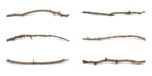 Set Of Old Dry Tree Branches On White Background. Banner Design