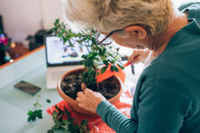 Woman Caring For Bonsai