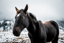 Black Horse Standing On Land In Snow During Winter