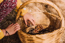 Girl Collecting Pine Cones In Wicker Basket At Park On Sunny Day