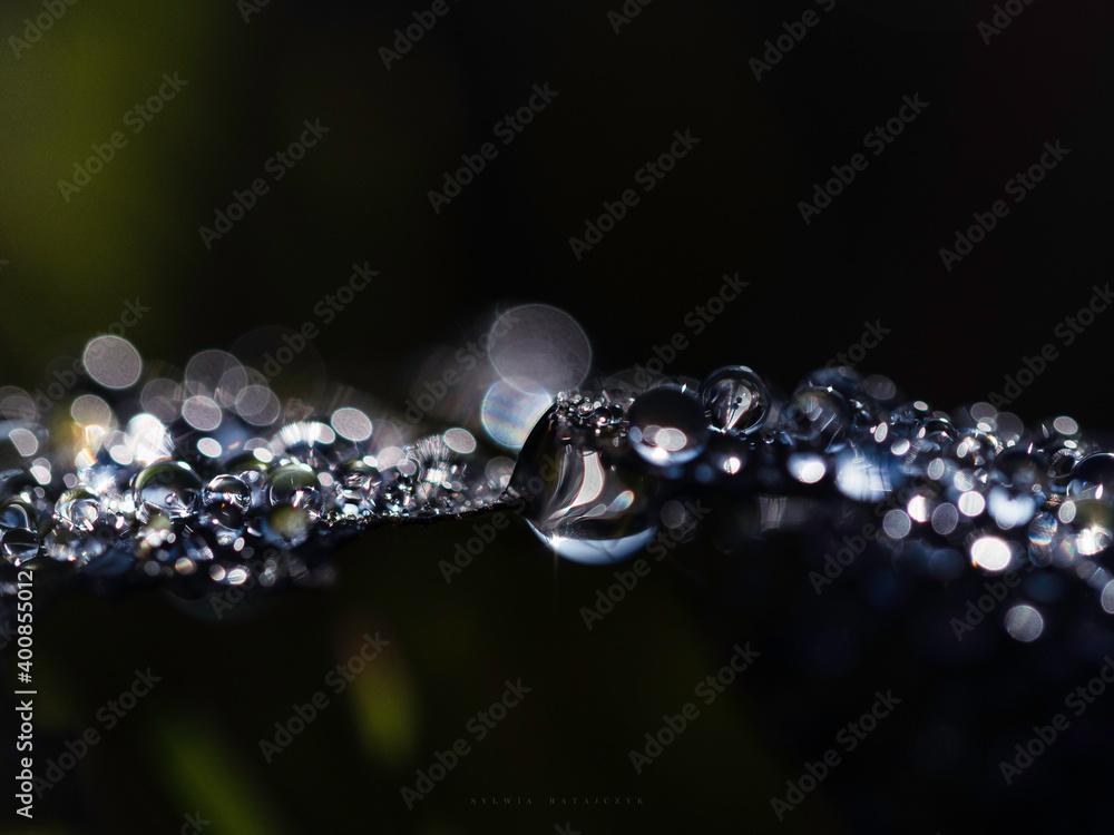 Fototapeta Krople wody na liściu dębu