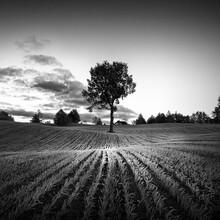 Drzewo Na Polu