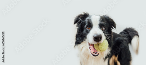 Funny portrait cute puppy dog border collie holding toy ball in mouth isolated on white background Fototapete