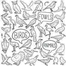 Bird Animals Doodle Icon Set. Fly Vector Illustration Collection. Banner Hand Drawn Line Art Style.