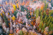 Drone View Of Autumn Forest At Dawn