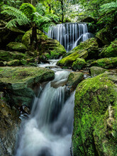Australia, New South Wales, Katoomba, Leura Cascade In Forest