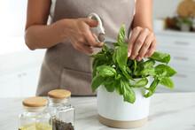 Woman Picking Fresh Basil At White Table In Kitchen, Closeup