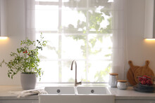 Kitchen Counter With Sink And Potted Tomato Bush Near Window