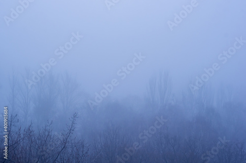 Canvas Winter urban frosty landscape - snow covered trees on foggy background