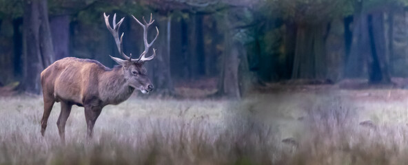 a large buck deer in a field