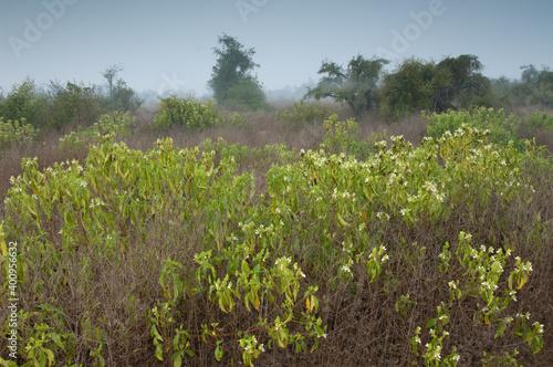 Fotografija Scrubland in Keoladeo Ghana National Park at Bharatpur