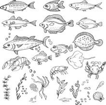 Fish, Crabs, Seafood. Shrimp, Halibut, Tuna, Shrimp, Flounder. Seamless Pattern. Hand Drawn Watercolor Illustration. Travel, Sea, Ocean, Food. Print, Textiles