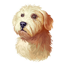 Glen Of Imaal Terrier Dog Breed Digital Art Illustration Isolated On White. Popular Puppy Portrait With Text. Cute Pet Hand Drawn Portrait. Graphic Clip Art Design.